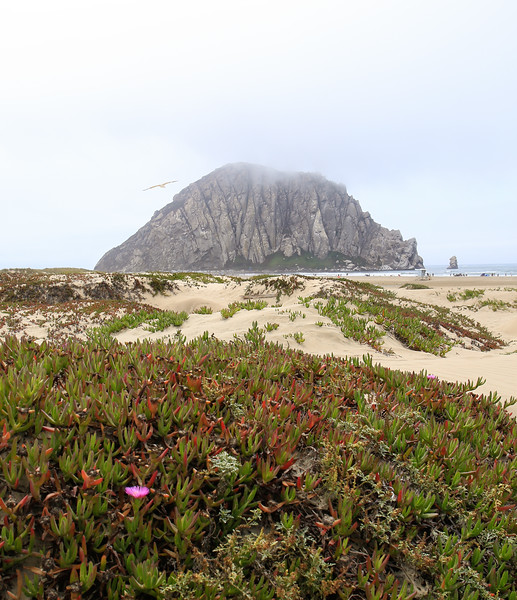 Morro Bay Beauty-.jpg