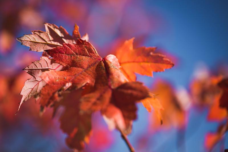 20151024-Fall Colors-95.jpg