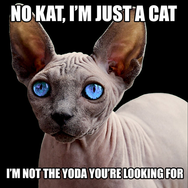 No-Kat,-Just-a-Cat.jpg