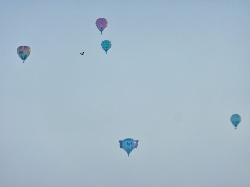 232 Michigan August 2013 - Hot Air Balloons.jpg