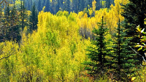Colorado Autumn Travel - 2012