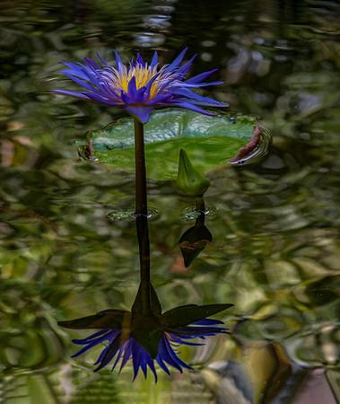 McKee Botanical Gardens - July 22, 2021