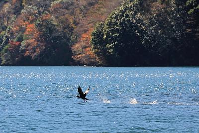 Hakone Late Fall 2013