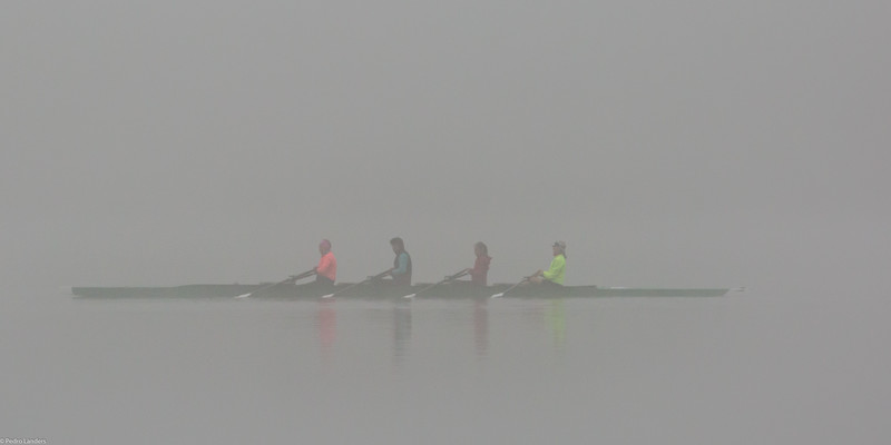 Sculling in the Mist