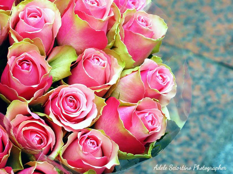 Roses ~ Flower Market