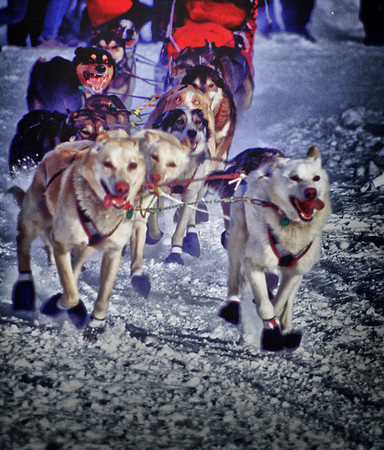 Iditarod 2004- Alaska