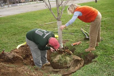 Tree Planting, Garrison Park 11/9/08