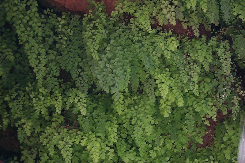 Ferns   (Jun 06, 1999, 12:35pm)