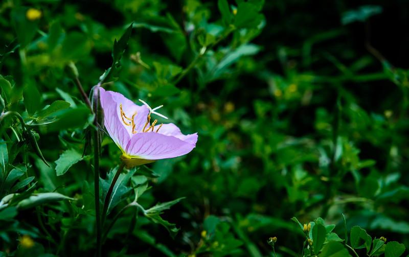 wild flower-.jpg