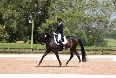 Horse 374