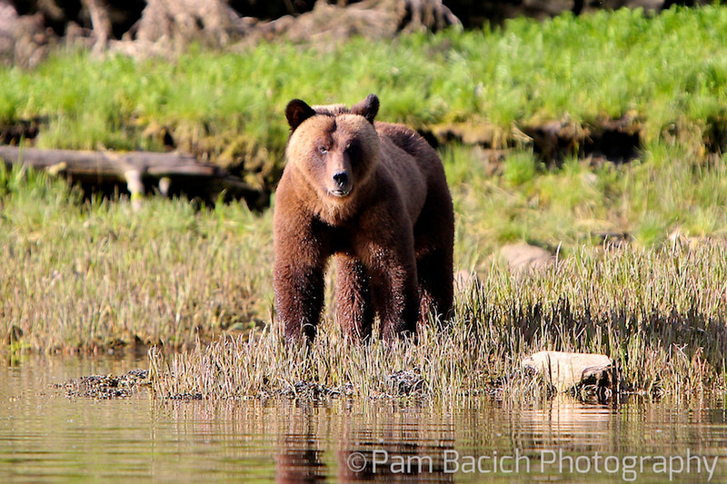 Grizzly Mom
