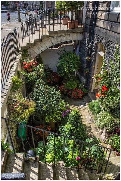 Basement garden, Heriot Row (1)