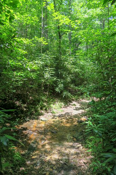 Buckhorn Gap Trail -- 3,330'