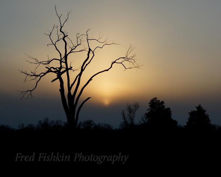 Jennings tree sunset.jpg