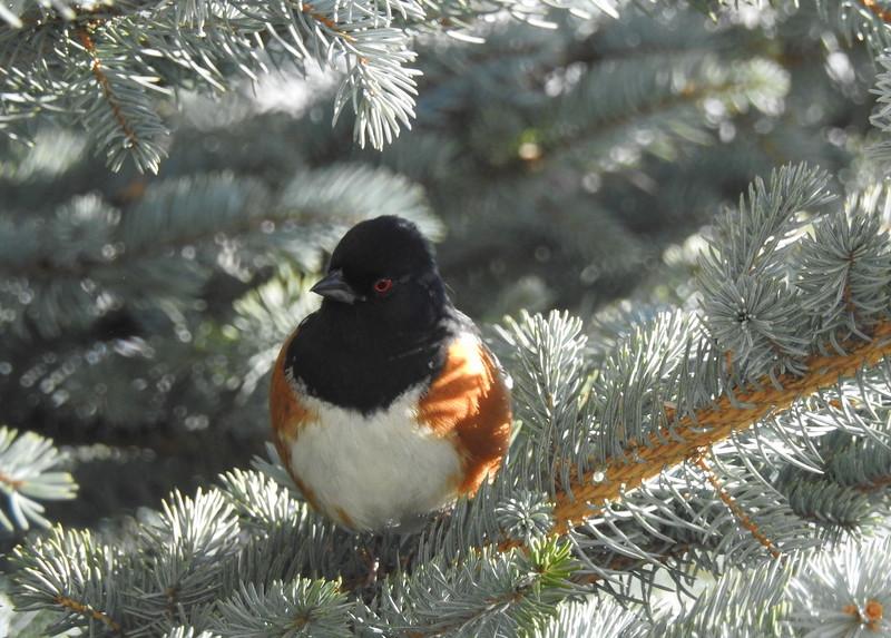 birds (205).JPG