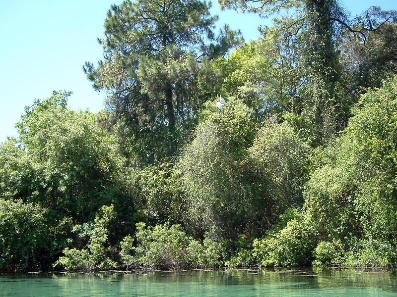 Tarpon Springs FL Wildlife (2).jpg