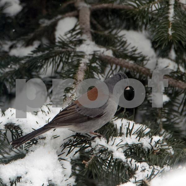 tell bird  6.jpg