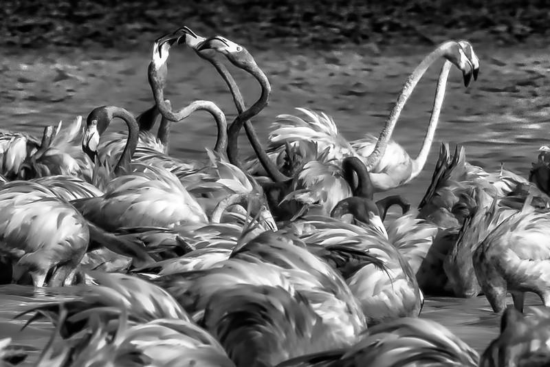 Flaming Flamingos