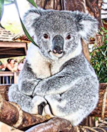 Topaz Koala 1.jpg