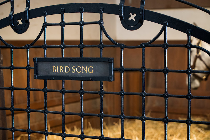 19_0209_BirdSong_ww-8627.jpg