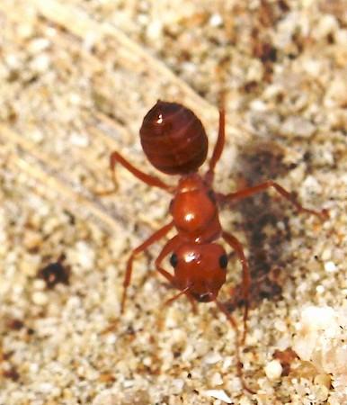 Un-identified ants
