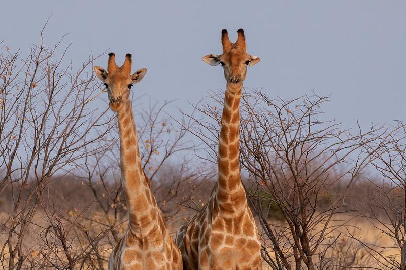 Namibia 69A7527.jpg