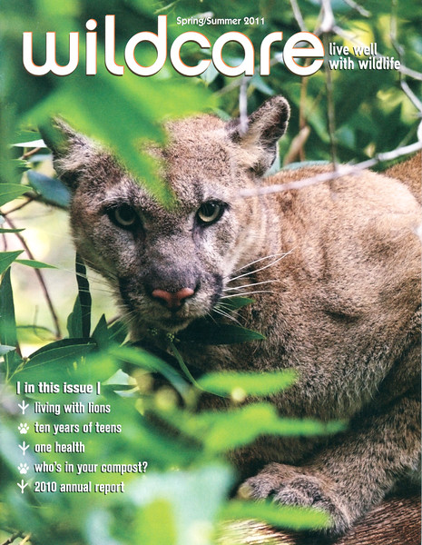 Wildcare cover photo of Wild Mountain Lion