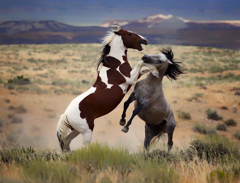 War Horses IV