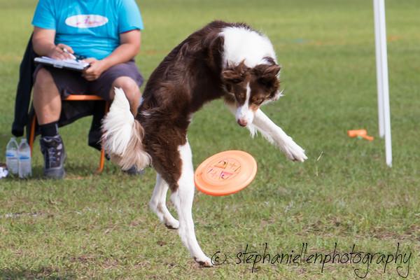 _MG_2609Up_dog_International_2016_StephaniellenPhotography.jpg
