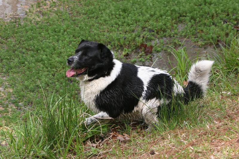 Bessie loves the PIney Mountain pond