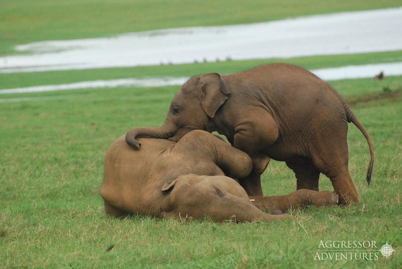 srilanka-animals-wm8.jpg