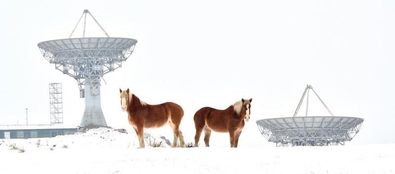 Satellite Horses.jpg