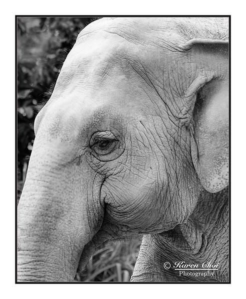 Elephant closeup sm.jpg