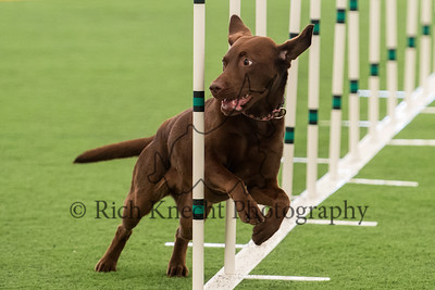 Berks County Dog Training Club AKC Agility Trial June 28-30