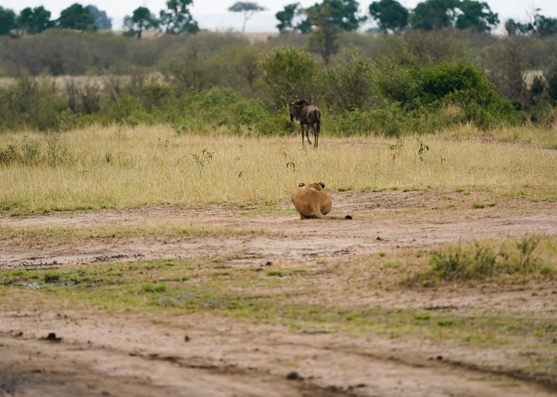 safari-2018-85.jpg