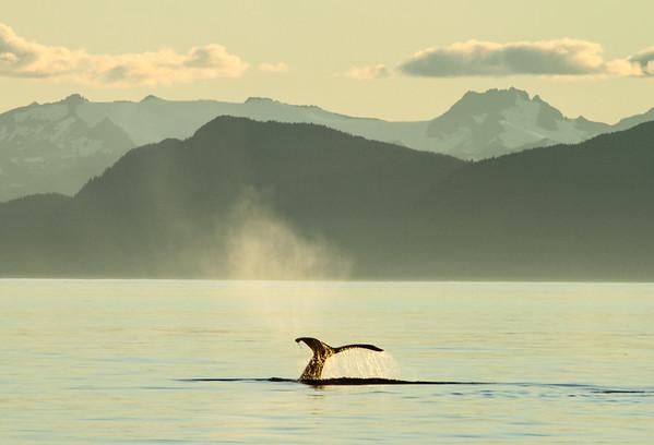 Alaska: Frederick Sound