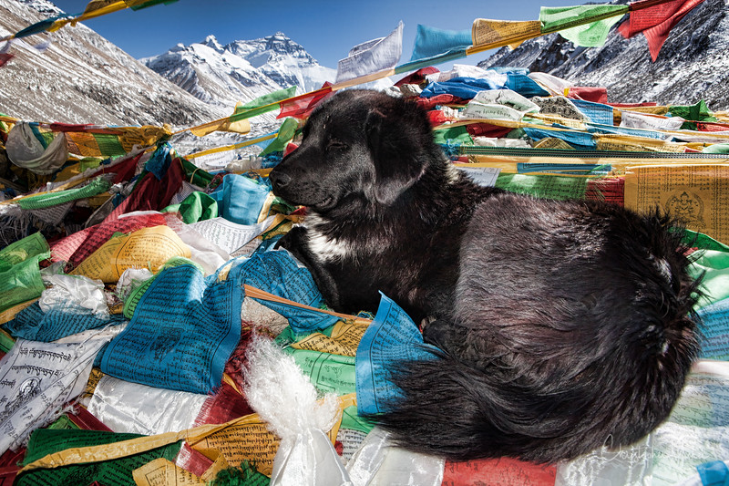 20101103_everest base camp_5406.jpg