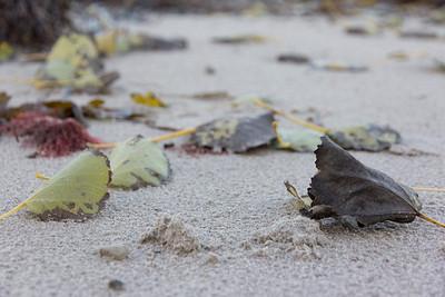 20121104 Denmark, Lavensby Strand