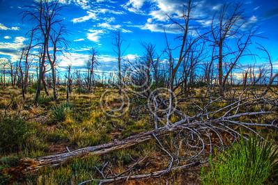 Mesa Verde 2012