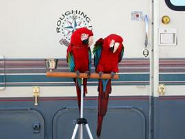 RV and Birds
