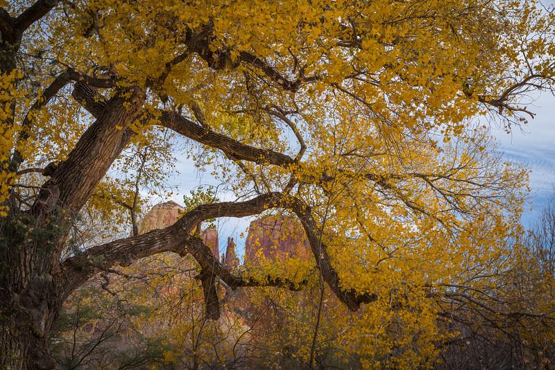 Sedonaa Thanksgiving Fall (19).jpg