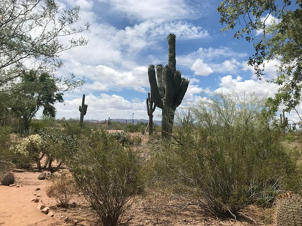 Big Trip 2019 - Scottsdale and Sedona