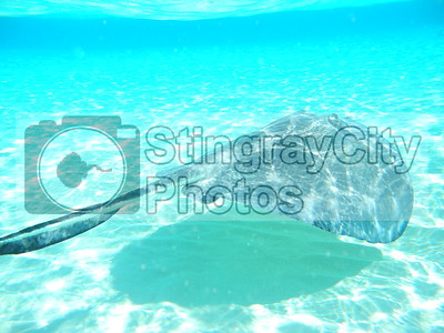 Grand Cayman Island Photos