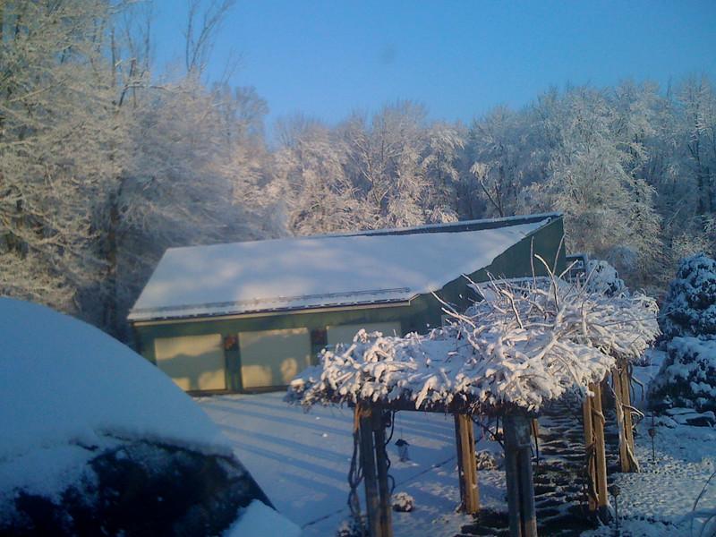 first snow 2009 (3)