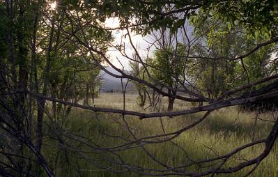 2004 Landscape
