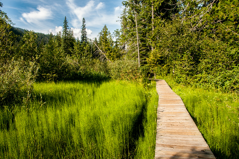 Wooden trail in Mount Revelstoke National Park, Canada