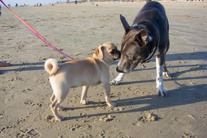 dogs_beach-19.jpg