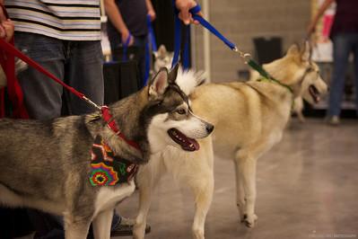 2012 SHCA National Parade of Rescue Dogs