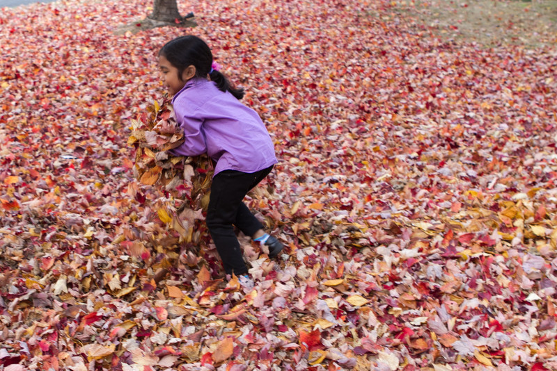 Autumn-Cleaning-2013-10.jpg