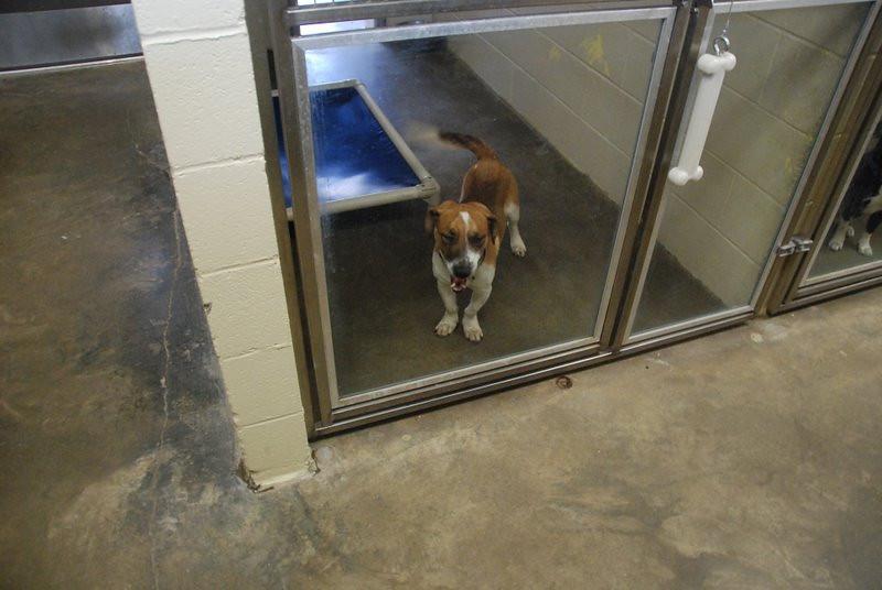 Kentucky Humane Society 2010 030.jpg